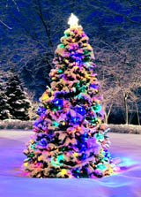 Outdoor Christmas Tree With Lights.Outdoor Christmas Tree Lights Collection Outdoor Christmas Lights