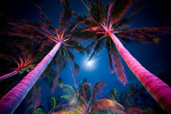 tropical outdoor lighting