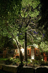 Outdoor Tree Lighting Advice And Tips