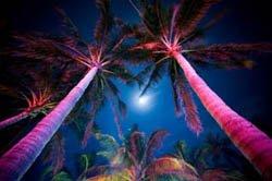 tropical outdoor lighting